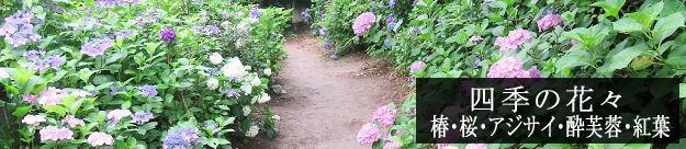 四季の花々